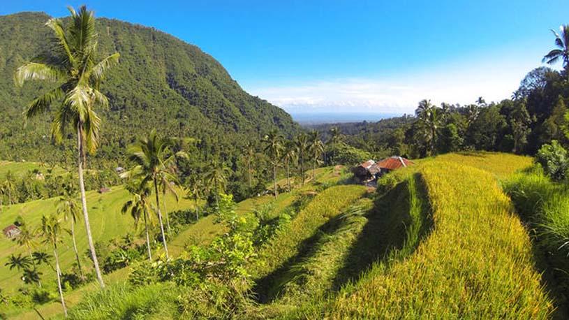 Sekumpul waterfall trekking, Sekumpul waterfall jungle trekking, Sekumpul jungle trekking, Bali Jungle Trekking, Sekumpul waterfall trekking tour.